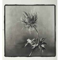 Fiore di carciofo - n. 8