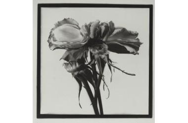 Rosa - n. 16