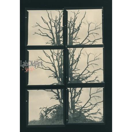 albero annerimento diretto viraggio selenio