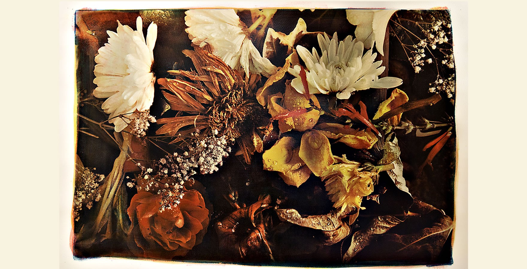 Flowers - Three color gum bichromate over cyanotype