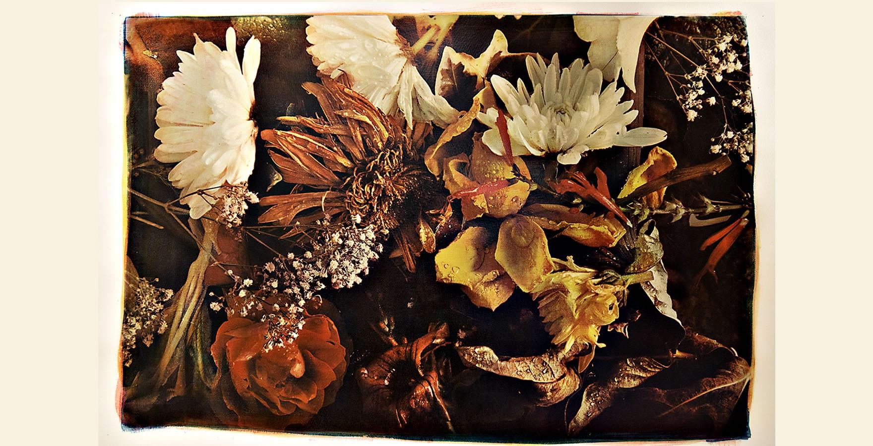 Flowers - Gomma bicromata in tricromia su cianotipia