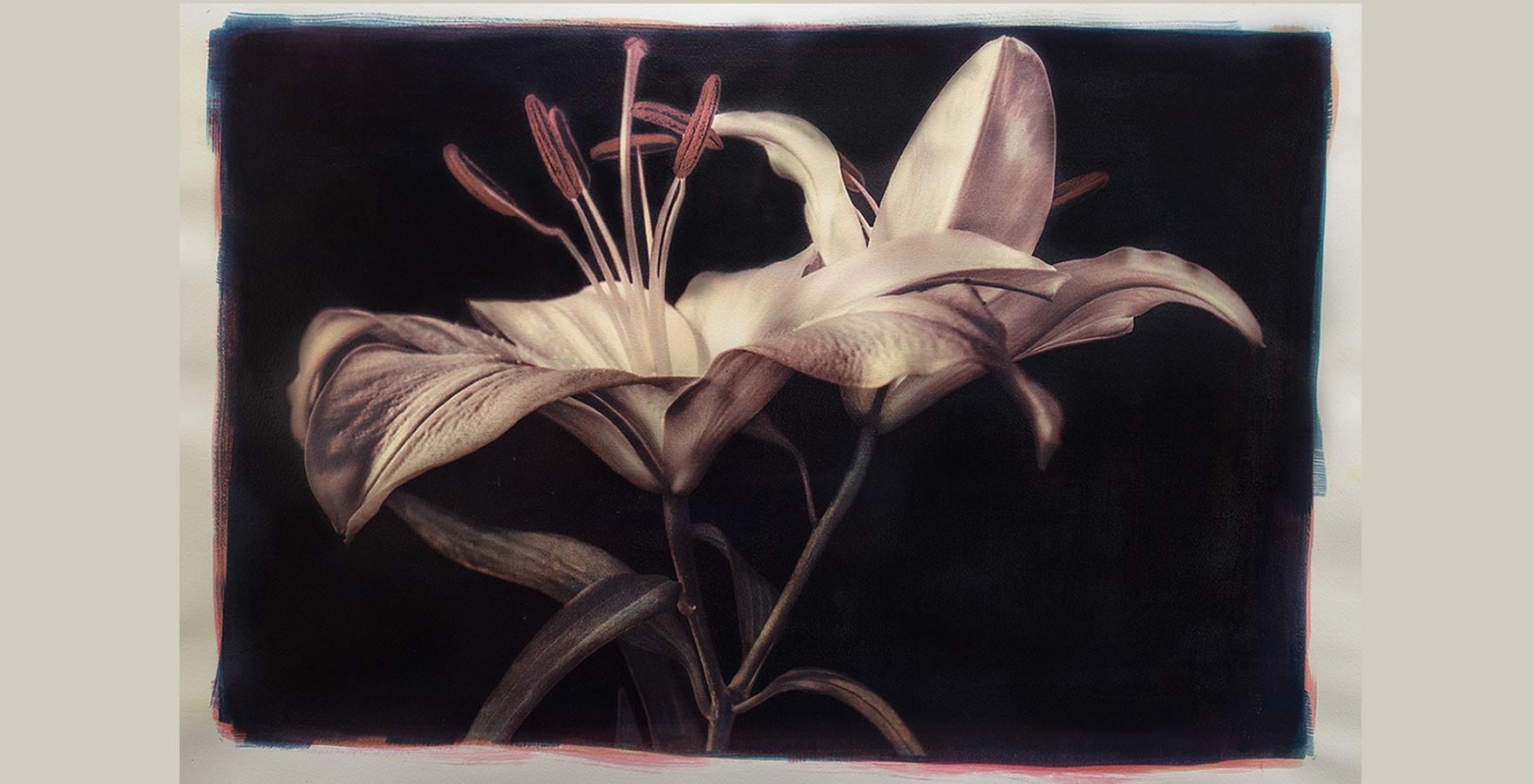 Lilies - Gomma bicromata in tricromia su cianotipia